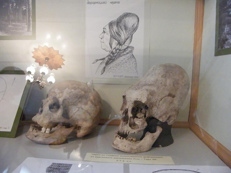 Один из черепов, обнаруженных вблизи Окунево. Хранится в Муромцевском краеведческом музее.