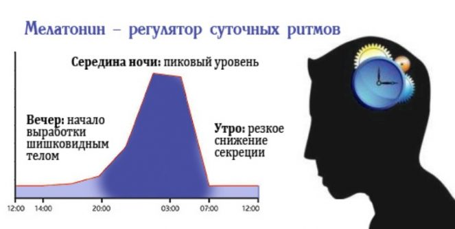 график выработки гормона