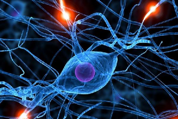 связи мозга